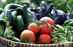 市民農園イメージ_写真2
